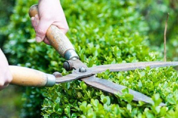 Lamberty jardinier paysagiste en seine et marne a votre for Jardinier paysagiste 94